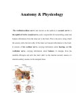 Anatomy & Physicology
