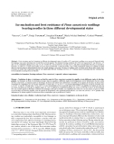 """Báo cáo lâm nghiệp: """"ce nucleation and frost resistance of Pinus canariensis seedlings bearing needles in three different developmental states"""""""