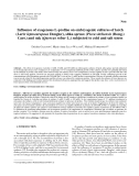 """Báo cáo lâm nghiệp: """"Influence of exogenous L-proline on embryogenic cultures of larch (Larix leptoeuropaea Dengler), sitka spruce (Picea sitchensis (Bong.) Carr.) and oak (Quercus robur L.) subjected to cold and salt stress"""""""