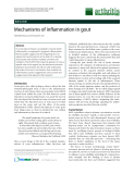 "Báo cáo y học: ""Mechanisms of inflammation in gout"""