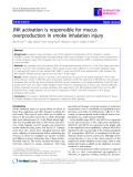 """Báo cáo y học: """" JNK activation is responsible for mucus overproduction in smoke inhalation injury"""""""