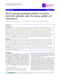 "Báo cáo y học: "" Mucin granule-associated proteins in human bronchial epithelial cells: the airway goblet cell ""granulome"""