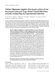 "Báo cáo khoa học: "" Neither Hippurate-negative Brachyspira pilosicoli nor Brachyspira pilosicoli Type Strain Caused Diarrhoea in Early-weaned Pigs by Experimental Infection"""
