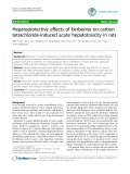 """Báo cáo y học: """" Hepatoprotective effects of berberine on carbon tetrachloride-induced acute hepatotoxicity in rats"""""""