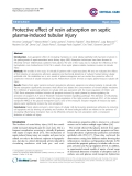 "Báo cáo y học: ""Protective effect of resin adsorption on septic plasma-induced tubular injury"""