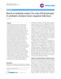 """Báo cáo y học: """"Bench-to-bedside review: The role of β-lactamases in antibiotic-resistant Gram-negative infections"""""""