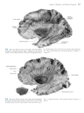 Neuroanatomy atlas of structures sections systems - part 3