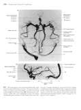 Neuroanatomy atlas of structures sections systems - part 9