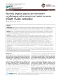 Reactive oxygen species are involved in regulating a1-adrenoceptor-activated vascular smooth muscle contraction