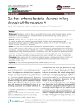 """Báo cáo y học: """" Gut flora enhance bacterial clearance in lung through toll-like receptors 4"""""""