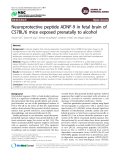 """Báo cáo y học: """" Neuroprotective peptide ADNF-9 in fetal brain of C57BL/6 mice exposed prenatally to alcohol"""""""
