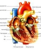 Introduction to the Cardiovascular System - part 3