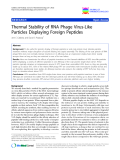 Thermal Stability of RNA Phage Virus-Like Particles Displaying Foreign Peptides