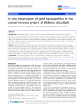 """báo cáo khoa học: """"In vivo observation of gold nanoparticles in the central nervous system of Blaberus discoidalis"""""""