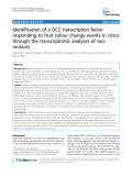 "báo cáo khoa học: ""  Identification of a GCC transcription factor responding to fruit colour change events in citrus through the transcriptomic analyses of two mutants"""