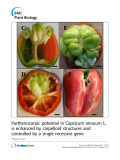 "báo cáo khoa học: ""Parthenocarpic potential in Capsicum annuum L. is enhanced by carpelloid structures and controlled by a single recessive gene"""
