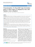 "báo cáo khoa học: ""  Characterization of wheat Bell1-type homeobox genes in floral organs of alloplasmic lines with Aegilops crassa cytoplasm"""