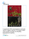 "báo cáo khoa học: "" A cytochrome P450 monooxygenase commonly used for negative selection in transgenic plants causes growth anomalies by disrupting brassinosteroid signaling"""