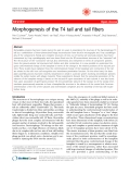 "Báo cáo y học: "" Morphogenesis of the T4 tail and tail fibers"""