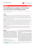 "Báo cáo y học: "" Immunofluorescence Analysis of Duck plague virus gE protein on DPV-infected ducks"""