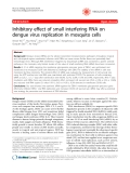 """Báo cáo y học: """" Inhibitory effect of small interfering RNA on dengue virus replication in mosquito cells"""""""