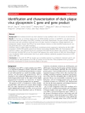 "Báo cáo y học: ""Identification and characterization of duck plague virus glycoprotein C gene and gene product"""