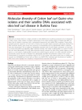 "Báo cáo khoa học: ""Molecular diversity of Cotton leaf curl Gezira virus isolates and their satellite DNAs associated with okra leaf curl disease in Burkina Faso"""