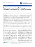 """Báo cáo hóa học: """"Retention of progenitor cell phenotype in otospheres from guinea pig and mouse cochlea"""""""