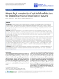 """Báo cáo hóa học: """"Morphologic complexity of epithelial architecture for predicting invasive breast cancer survival"""""""