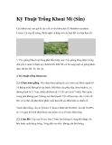Kỹ Thuật Trồng Khoai Mì (Sắn)