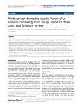 """Báo cáo hóa học: """" Phytocontact dermatitis due to Ranunculus arvensis mimicking burn injury: report of three cases and literature review"""""""