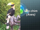 Lớp chim (Aves)