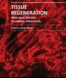 TISSUE REGENERATION – FROM BASIC BIOLOGY TO CLINICAL APPLICATION