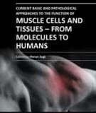 CURRENT BASIC AND PATHOLOGICAL APPROACHES TO THE FUNCTION OF MUSCLE CELLS AND TISSUES – FROM MOLECULES TO HUMANS