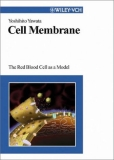 Cell Membrane: The Red Blood Cell as a Model