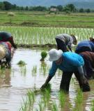 IRRIGATION AND DRY-FARMING