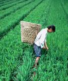 AGRICULTURE RETURN TO JAPAN