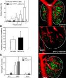 A Novel Endothelial L-Selectin Ligand Activity in Lymph Node  Medulla That Is Regulated by (1,3)-Fucosyltransferase-IV
