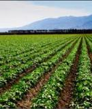 Crop Insurance, Disaster  Assistance, and the Role of the  Federal Government in Providing Catastrophic Risk Protection