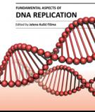 FUNDAMENTAL ASPECTS OF DNA REPLICATION