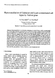"Báo cáo "" Phytoremediation of Cadmium and Lead contaminated soil types by Vetiver grass """