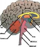 Cancer of the Brain and  Other Central Nervous System