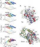 Short hydrogen bonds in proteins