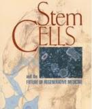 Stem CELLS and the FUTURE OF REGENERATIVE MEDICINE