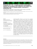 Báo cáo khoa học: Esculentin-1b(1–18) – a membrane-active antimicrobial peptide that synergizes with antibiotics and modifies the expression level of a limited number of proteins in Escherichia coli