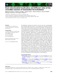 Báo cáo khoa học: Dual mitochondrial localization and different roles of the reversible reaction of mammalian ferrochelatase
