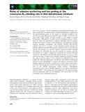 Báo cáo khoa học: Roles of adenine anchoring and ion pairing at the coenzyme B12-binding site in diol dehydratase catalysis