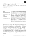 Báo cáo khoa học: ATP-dependent modulation and autophosphorylation of rapeseed 2-Cys peroxiredoxin