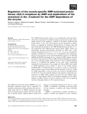 Báo cáo khoa học: Regulation of the muscle-specific AMP-activated protein kinase a2b2c3 complexes by AMP and implications of the mutations in the c3-subunit for the AMP dependence of the enzyme