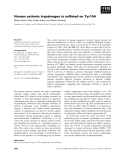 Báo cáo khoa học: Human cationic trypsinogen is sulfated on Tyr154